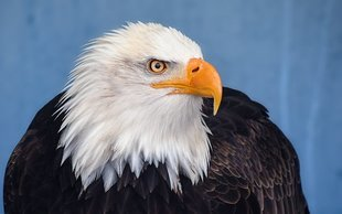 Ptasi horoskop - sprawdź, który ptak patronuje miesiącowi, w którym się urodziłaś