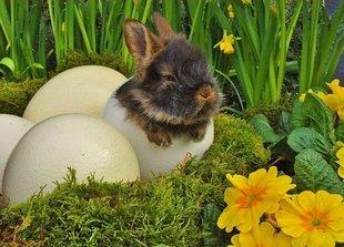 Zajączek Wielkanocny - symbol płodności – emanacja wiatru