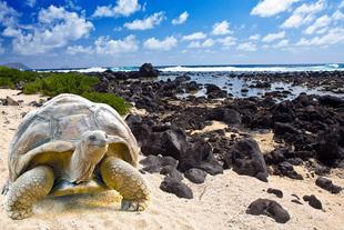 Uratujmy Galapagos!