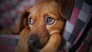 Psy potrafią rozpoznać złych ludzi. Najnowsze badania to potwierdzają