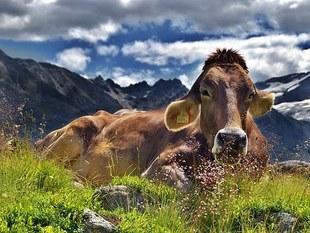 Czy moglibyśmy jeść trawę, jak krowa?