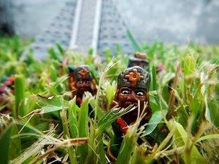 Aztekowie - upiorni kanibale?
