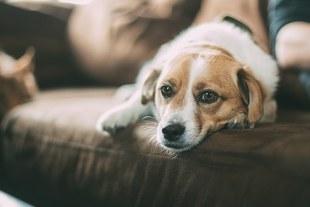Eutanazja - kiedy uśpić swojego ukochanego zwierzaka