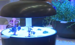 Technologia od NASA pozwala na uprawę roślin i warzyw w domu. Możesz mieć zioła lub pomidory!