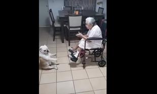 Babcia śpiewa, pies tańczy
