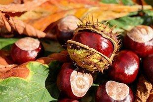 Wyjdź z domu - jesień to piękna pora roku!