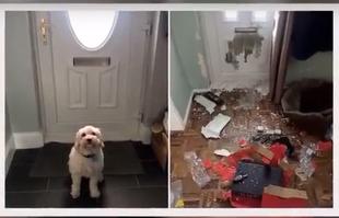 Przez 3 godziny ukochany pies zrobił szkody na 1500 funtów!