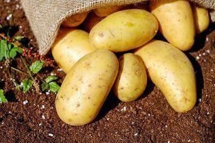 Polska ziemniakami i żytem stała - badanie na 100 lecie niepodległości