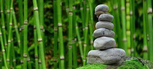 10 magicznych roślin, które warto mieć. Uwalniają od złej energii, przyciągają miłość i bogactwo.
