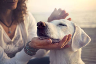 Rasy psów krótkowłosych – jak pielęgnować psy z krótką sierścią?