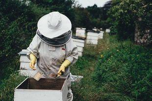 Produkty pszczele pomagają w leczeniu nowotworów, w tym glejaków mózgu