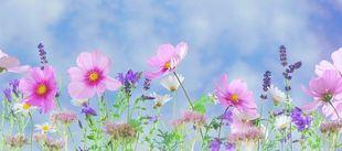 Wiosenne porządki - zacznij nowe życie!