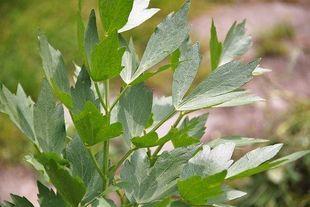 """Pokochaj zdrowe """"chwasty""""! Projekt Wild&Root Food przypomina o najsmaczniejszych dzikich ziołach"""