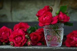 Co zrobić, by cieszyć się kwiatami jak najdłużej?