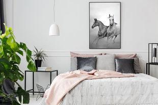 Plakaty z końmi – dekoracja, która galopem zmieni nasz wystrój