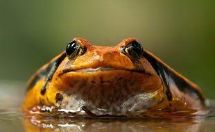 Syndrom gotującej się żaby. Co zabiło żabę?