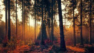Susza w lasach powoduje osłabienie drzew. Część gatunków może już wkrótce całkowicie zniknąć
