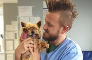 Chcieli uśpić psa, bo jadą na wakacje. Dr Przemysław Łuczak uratował go od śmierci