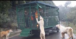 Jedyne takie zoo - to zwiedzający są w klatkach!
