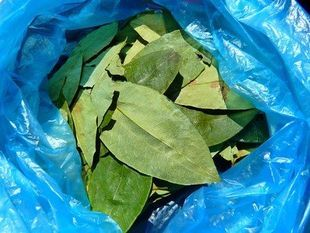 Ludzie żują liście koki od 8000 lat