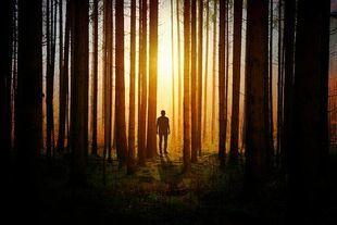 Za kilkadziesiąt lat z polskich lasów może zniknąć 75 proc. drzew