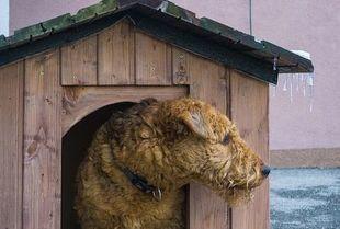 Reagujmy mądrze na krzywdę zwierząt