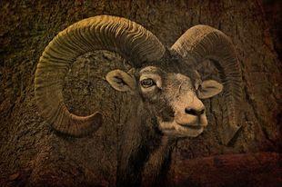 Horoskop na 2020 - Baran