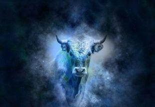 Horoskop 2020  - Byk