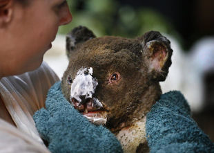 Australia płonie, Polska wysycha – katastrofa klimatyczna dzieje się na naszych oczach
