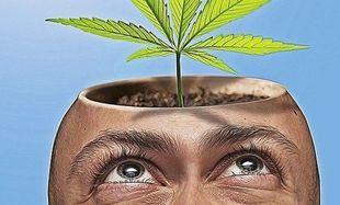 Marihuana wcale nie jest narkotykiem niegroźnym