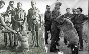 Wzruszająca historia o niedźwiedziu Wojtku, który walczył podczas II wojny światowej