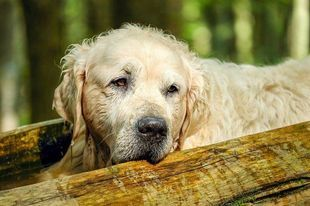 Problem bezdomnych psów