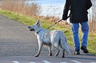 Koronawirus. Hiszpanie, żeby nie płacić kar za wyjście z domu, wypożyczają psy