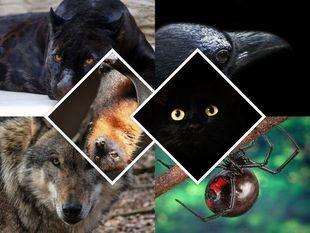Wybierz swoje zwierzę ciemnej strony mocy