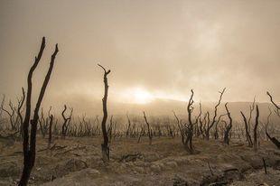 Efekt bumerangu – epidemie są konsekwencją naszych działań