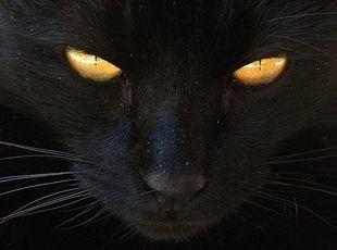 Dlaczego czarny kot ma przynosić pecha?