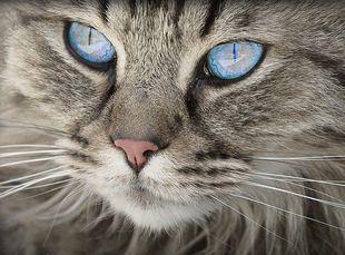 Magia kotów, o której pewnie nie wiecie...