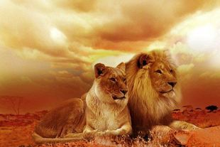 Niesamowite opowieści o zwierzętach