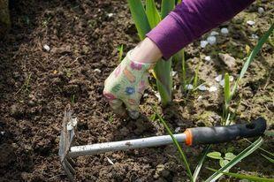 14 sposobów użycia sody oczyszczonej w ogrodzie. Zdziwisz się, jaka jest przydatna