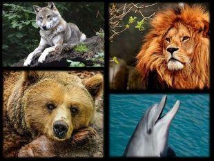 Znajdź swój zwierzęcy chronotyp i wykorzystaj swój potencjał!