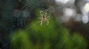 Dlaczego nie powinniśmy zabijać pająków?