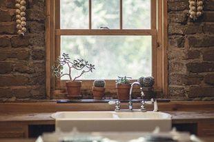 Czy kaktusy w domu przynoszą pecha?
