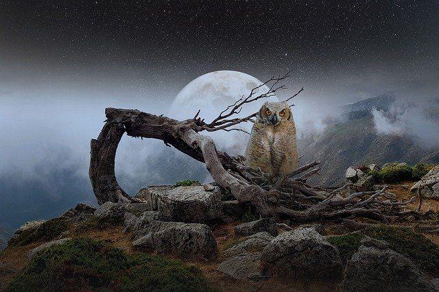 Obraz  mollyroselee z  Pixabay