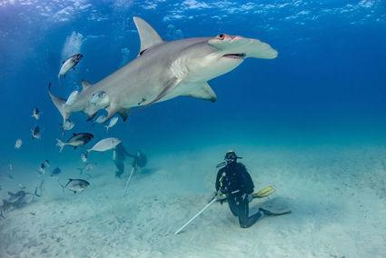 Kobieta, która kocha rekiny
