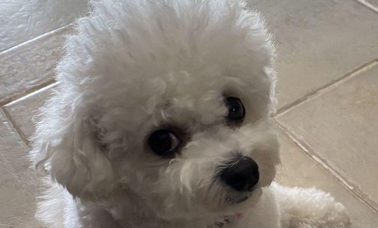 Pies mówi oczami - właściciele to wiedzą
