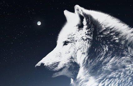 Nadchodzi pełnia Wilczego Księżyca. Co nam przyniesie?