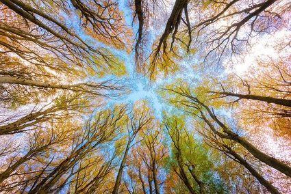 Horoskop Celtów - jakie drzewo symbolizuje twoje cechy osobowości