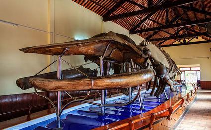 Van Thuy Tu - to w tej wietnamskiej świątyni jest największy szkielet wieloryba w Azji Południowo - Wschodniej