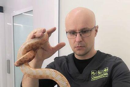 """""""Leczymy węże, jaszczurki, żółwie, operowany był nawet pająk"""""""