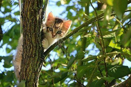 Jak odstraszyć obce koty od ogrodu tak, aby nie zrobić im krzywdy